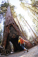 Young woman hiking in a sequoia grove in Yosemite National Park, Ca.
