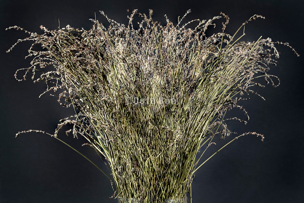 dried lavender bouquet with most seeds gone