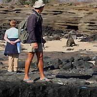 South America, Ecuador, Galapagos Islands, Santiago Island, James Island, Port Egas. watching a sea lion  onhore at James (Santiago) Islands.