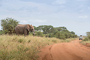 Landscape with African elephants (Loxodonta africana) and a safari car on a dirt road in Tarangire National Park, Tanzania