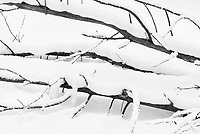 https://Duncan.co/fallen-trees-in-snow-black-and-white