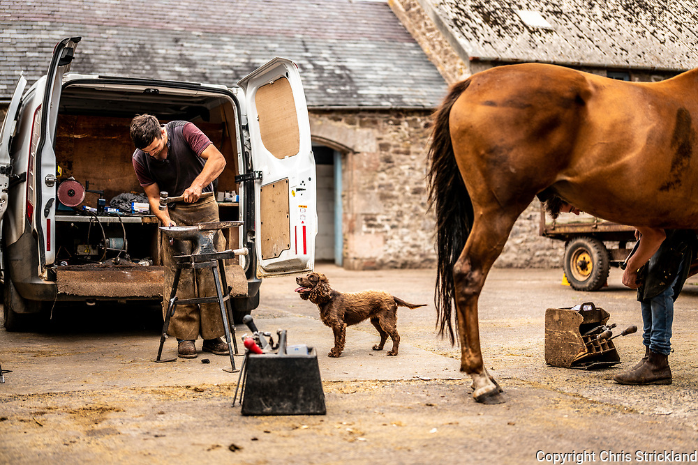 Brundeanlaws, Camptown, Jedburgh, Scottish Borders, UK. 15th August 2018. Farriers Neil Anderson and Jack Brown shoe racehorse Pickle and Tickle at the yard of trainer Gary Rutherford near Jedburgh in the Scottish Borders. National Hunt racing in Scotland generates in excess of £300 million in revenue.