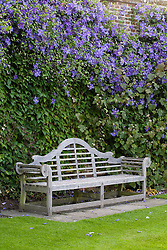 Clematis 'Perle d'Azur' growing on a wall behind Lutyens bench at the top of the Rose Garden at Sissinghurst Castle