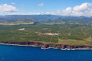 Coffee farm. Kauai, Hawaii