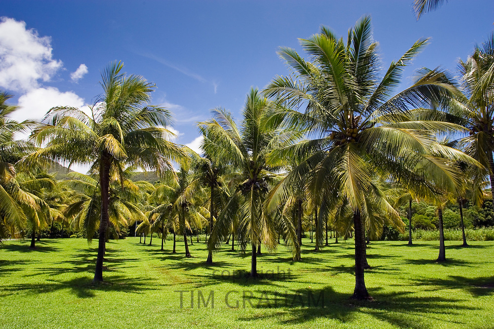 Palm trees in the Thala Beach area of Port Douglas, Australia
