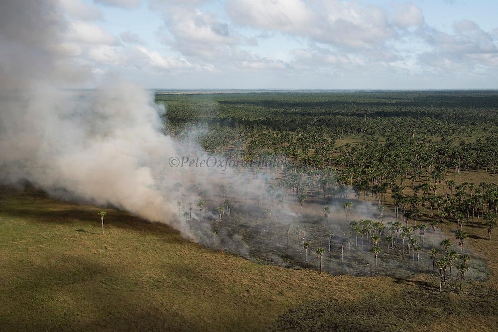 Fire in wetland<br /> West Demerara Conservancy<br /> West of Georgetown<br /> GUYANA<br /> South America