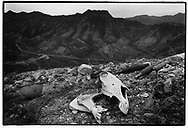 MAWAT, KURDISTAN, IRAQ, JANUARI 1994.  The Killing fields locally known as Death Valley still contain the corpses of Iraqi soldiers who could not be retrieven due to heavy mining. Millions of landmines and unexploded ordonance litter the former frontline in the Iran vs Iraq War still killing and maim ing Kurdish people on a daily basis.©Photo by Frits Meyst/NewsImages