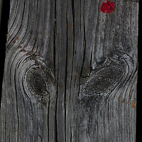 Rorschach - Wood Grain