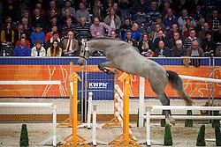 254 - Gregor<br /> KWPN Stallion Selection - 's Hertogenbosch 2014<br /> © Dirk Caremans