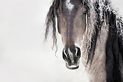 MENEWA MEANS GREAT WARRIOR IN CREEK NATIVE AMERICAN INDIAN TRIBE.<br /> <br /> THIS WILD MUSTANG IS A TRULY A GREAT WARRIOR – HE IS A LEADER. YOU CAN SENSE  HIS ALERTNESS, AND HIS STEADFAST GAZE AND STRENGTH VIBRATE DEEP WITHIN HIS VERY ESSENCE. I'M IN AWE OF THIS MAJESTIC HORSE.