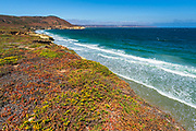 Colorful groundcover at Skunk Point, Santa Rosa Island, Channel Islands National Park, California USA