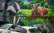 Badger & Highland cow mural, Glasgow, Scotland.