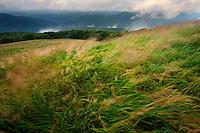 Windy grasslands on Polonina Carynska, Bieszczady National Park, Poland