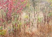 Autumn pasture still life