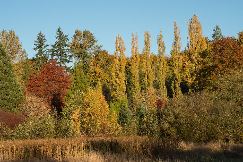 United States, Washington, Bellevue, Lewis Creek Park