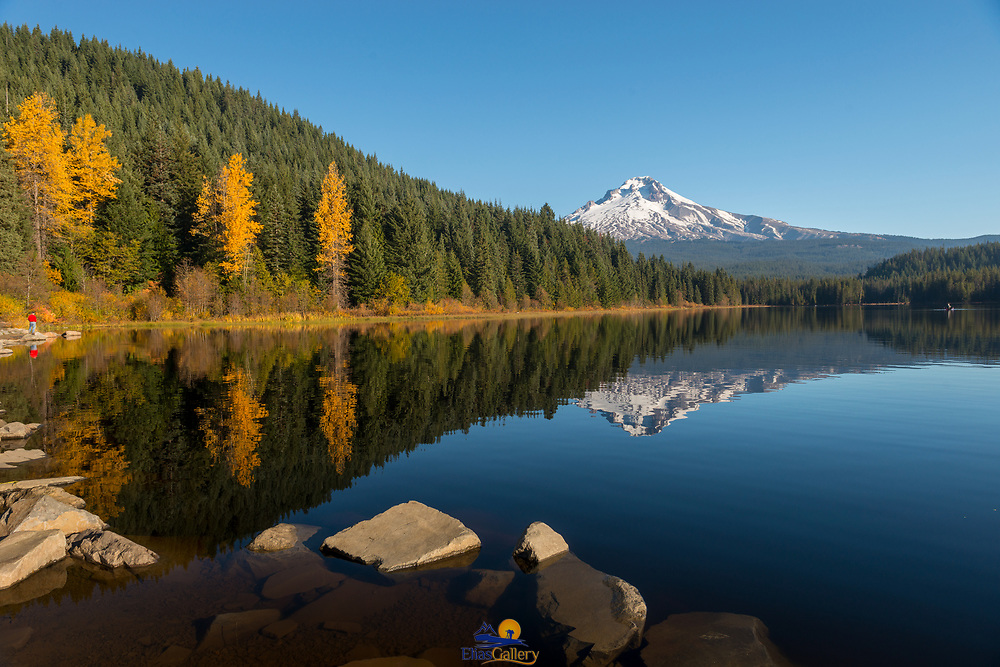 Fall colors in Trillium Lake with Mount Hood in the back reflecting on the water. Oregon.