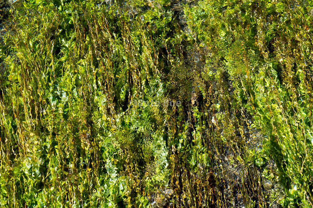 glass like clear clean water stream with green underwater vegetation