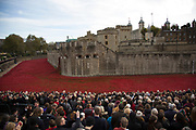 London, UK. 11th November, 2014. Crowds gather on Armistice Day to see the final poppy planted at the Tower of London, and to join in a two minute silence. 888,246 ceramic remebrance poppies have been planted. One for each life lost in the First World War. The installation has been made by Created by ceramic artist Paul Cummins, with setting by stage designer Tom Piper, and thousands of volunteers.