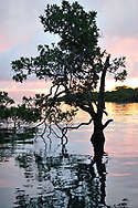 Sunrise over a mangrove forest in Golfo Dulce, or Sweet Gulf in Puntarenas, Costa Rica.