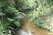 View of Stream in Rainforest, Mantadia National Park, Andasibe, Madagascar
