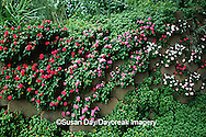 65021-033.14  Block wall planted with impatiens,  St Louis  MO