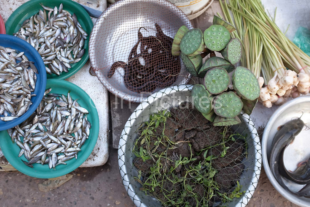 Fish, frogs, eels, catfish and lotus lower seeds for sale at Don Makai evening market in the outskirts of Vientiane, Lao PDR. A large variety of local products are available for sale in fresh markets all over Laos, all being sold on small individual stalls.