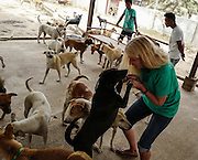 Terryl Just greets one of the dogs at the Yangon Animal Shelter.