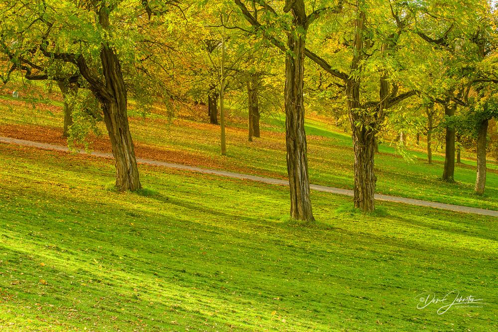 Fortress Marienberg-  Trees in the park, Wurzburg, Bavaria, Germany