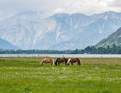 "THEMENBILD - grasende Haflinger und Noriker vor dem Zell See. Im Hintergrund das imposante Bergmassiv ""das Steinerne Meer"", aufgenommen am 10. Mai 2018, Zell am See, Österreich // horses (Haflinger and Noriker) in front of the Zell lake. In the background the imposing massif ""the Stone Sea"" on 2018/05/10, Zell am See, Austria. EXPA Pictures © 2018, PhotoCredit: EXPA/ Stefanie Oberhauser"