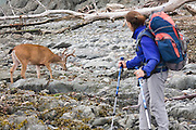 Backpacker Liana Welty watches a blacktail deer (Odocoileus hemionus columbianus) buck on the beach along the North Coast, between Chilean and Norwegian Memorial, in Olympic National Park, Washington.