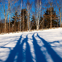 Morning after a big snow storm, bare maple trees behind the photographer cast long December shadows to the north; Damariscotta, Maine.  Beautiful example of a New England stone fence.