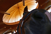 Switzerland, Uzwil, Health Balance clinic for animals..A horse inside the Healing Room: this circular treatment room allows.the animals to absorb beneficial positive energies. It is constructed.according to geobiological principles on a site rich in natural energy..Through the principles of Global Scaling, the Healing room encourages.the formation of natural vibrations. The room¹s foundations and the.rose quartz built into the pillars on the outside of the structure.strengthen the energy-giving effect.. The goldfish swims lazily between the fronds of fake seaweed, under the attentive gaze of the medical staff. ?When he came here he was moving all wrong. He swam crooked, he was almost upside-down,? explains Marisa Polanec, obviously enthusiastic at the result. For it appeared that the littlest in-patient at Health Balance, the Swiss clinic for animals, had been suffering from electrosmog poisoning. .An unusual complaint, yes, but here, in the midst of the clinic?s futuristic architecture and the green hills of San Gallo canton, the concept of normality is done away with even before arriving at a diagnosis. That?s because, to identify the cause of the goldfish?s suffering, Urs Buehler ?kinesiologist and the centre?s founder, as well as the owner of an industrial colossus in the region ?simply asked it, by using his ever-present dowsing rod. . The goldfish swims lazily between the fronds of fake seaweed, under the attentive gaze of the medical staff. ?When he came here he was moving all wrong. He swam crooked, he was almost upside-down,? explains Marisa Polanec, obviously enthusiastic at the result. For it appeared that the littlest in-patient at Health Balance, the Swiss clinic for animals, had been suffering from electrosmog poisoning. .An unusual complaint, yes, but here, in the midst of the clinic?s futuristic architecture and the green hills of San Gallo canton, the concept of normality is done away with even before arriving at a diagnosis. That?s because, to iden