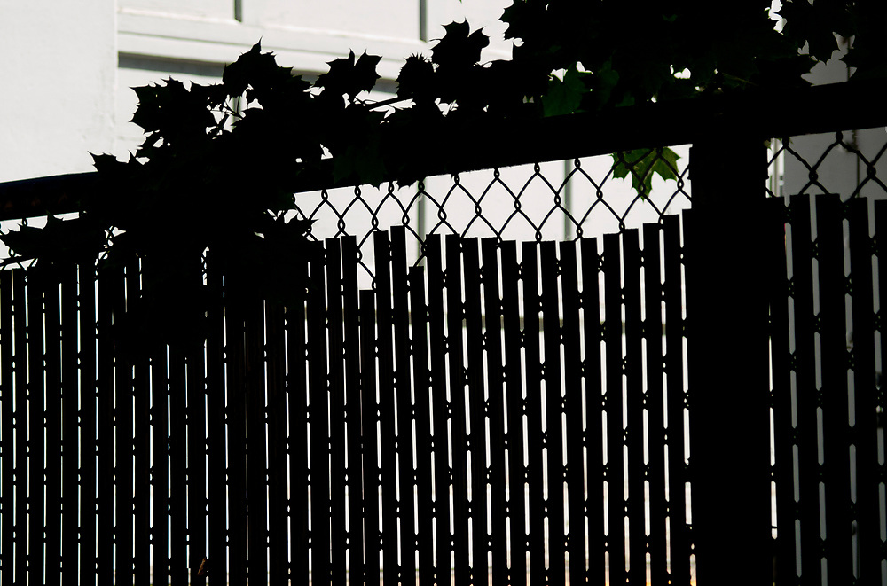 An image of an uban fence with a grape vine growing on it, mostly in black silhouette, but with a little color showing, a very high key image.