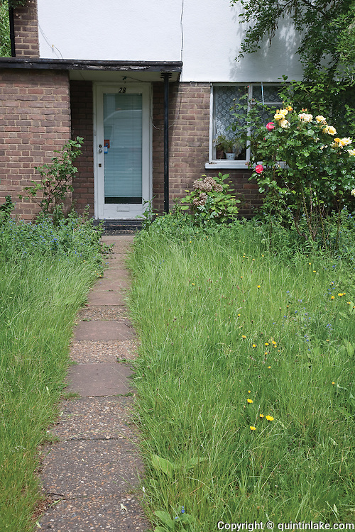 Path through an overgrown lawn. Stockwell, London, UK, 2009