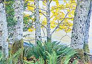 Quiet autumn stil life, Crescent Lake, Washington State