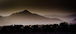 Desert landscape in evening light, southern Morocco<br /> <br /> (c) Andrew Wilson   Edinburgh Elite media
