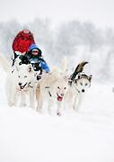 Alaskan huskies pull people on a sledge through the snow in Kirkeness, Finnmark region in northern Norway