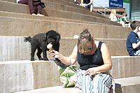 a Dog enjoys ice cream in Liverpool