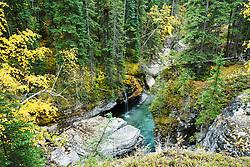 Autumn color, Maligne Canyon, Jasper National Park