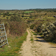 The pastures where bulls roam freely