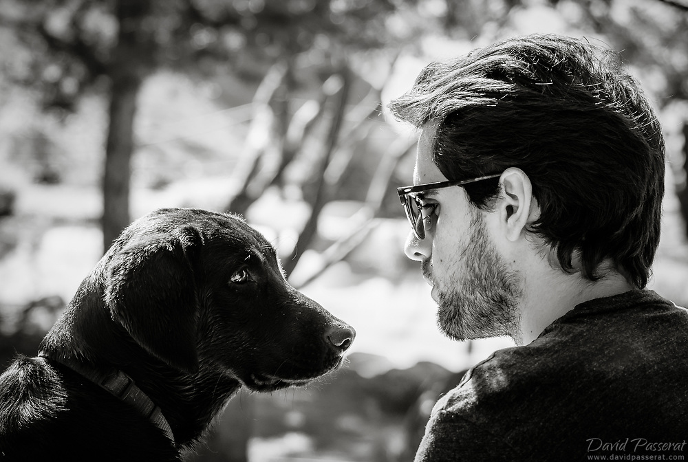 Dog and master connection