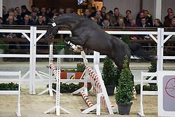 010, Nero C<br /> BWP Hengsten keuring Koningshooikt 2015<br /> © Hippo Foto - Dirk Caremans<br /> 21/01/16