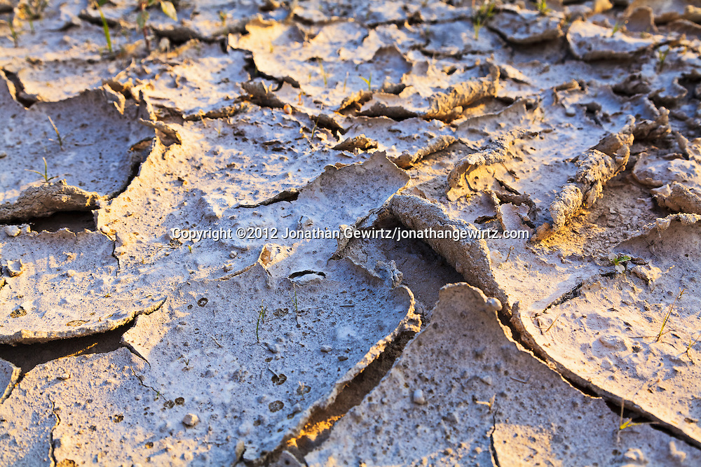Closeup view of a formerly muddy patch of sandy earth that has dried and cracked. WATERMARKS WILL NOT APPEAR ON PRINTS OR LICENSED IMAGES.
