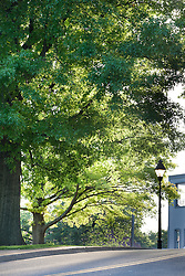 City of Warrenton Virginia trees at sunrise