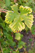 leaf with autumn colours domaine pelaquie rhone france