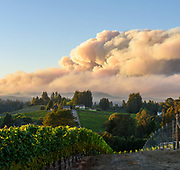 A massive smoke culumn from the Walbridge Fire rises into the sky above vineyards West of Sebastopol, California on August 19, 2020.