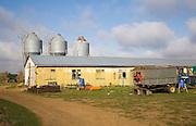 To be captioned after editing Three metal feed storage silos and barn in farmyard, Alderton, Suffolk, England