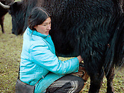 A Brokpa yak herder milks her yak in a meadow outside the village of Merak, Eastern Bhutan. The Brokpa, the semi-nomads of the villages of Merak and Sakteng are said to have migrated to Bhutan a few centuries ago from the Tshona region of Southern Tibet. Thriving on rearing yaks and sheep, the Brokpas have maintained many of their unique traditions and customs.