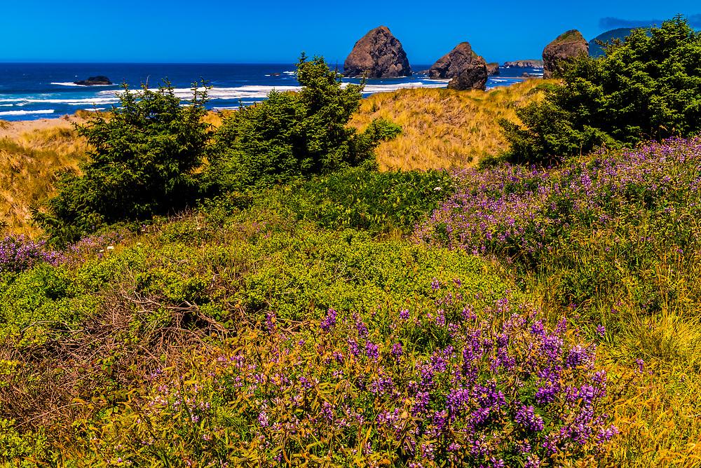 Meyers Creek Beach on the Oregon coast, USA.