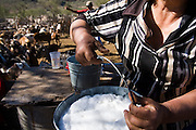 A woman carries a bucket filled with fresh goat's milk as others gather the herd in San Francisco de la Sierra, Baja California Sur, Mexico on January 31, 2009. Making goat cheese is the primary activity and source of income for the ranches in the area.